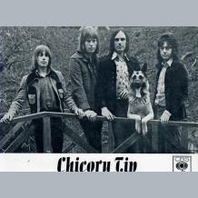 Chicory Tip